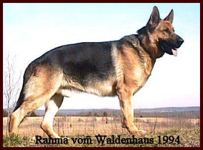 Vom Waldenhaus German Shepherd History
